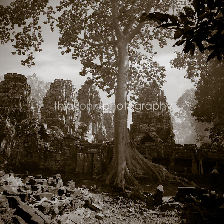 Looking into the Banyan Temple, with Banyan tree at Angkor Wat, Cambodia