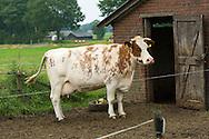 Nederland, Deventer, 20150812.<br /> op de boerderij bij Rick en Ardjuna met Mus