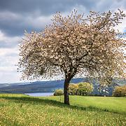 Eifel - Hohes Venn