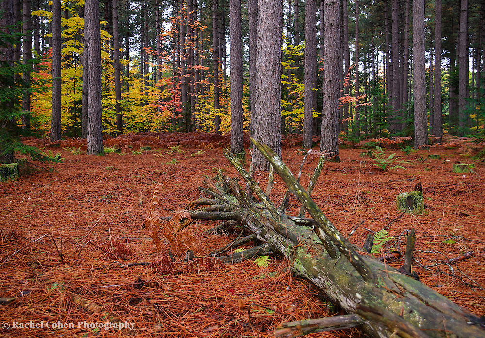 &quot;Fallen Tree&quot;<br />