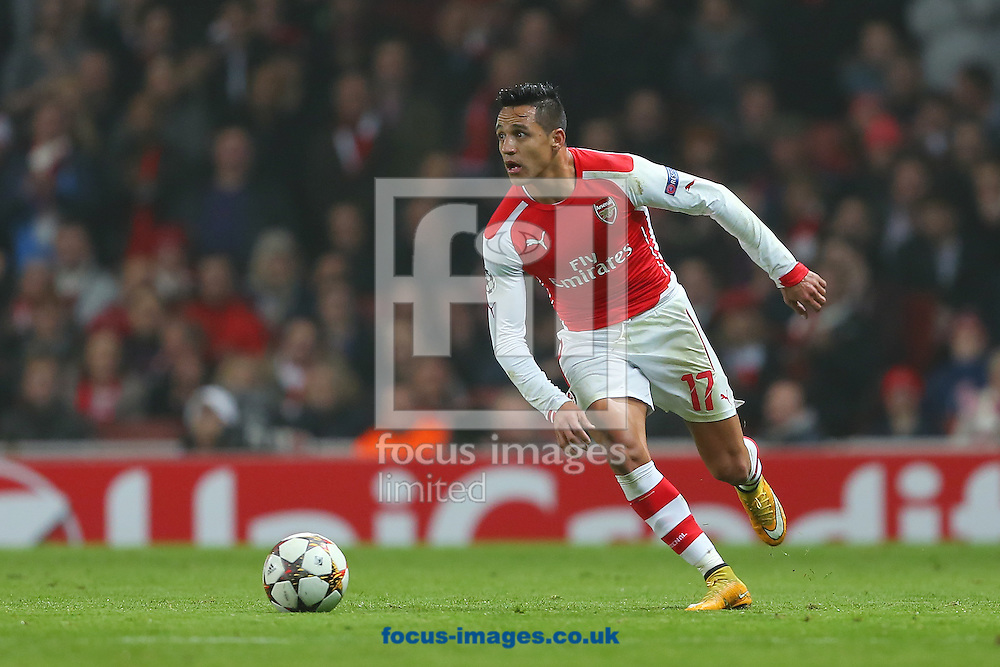 Alexis Sanchez of Arsenal during the UEFA Champions League match at the Emirates Stadium, London<br /> Picture by Richard Calver/Focus Images Ltd +447792 981244<br /> 26/11/2014