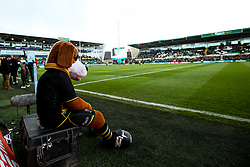 Northampton Saints mascot looks on at Franklin's Gardens - Mandatory by-line: Robbie Stephenson/JMP - 04/05/2019 - RUGBY - Franklin's Gardens - Northampton, England - Northampton Saints v Worcester Warriors - Gallagher Premiership Rugby