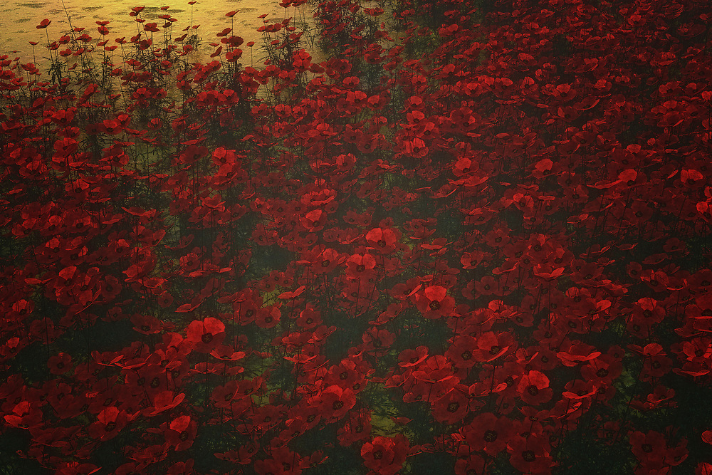 When you think about poppies, what are some of the thoughts and scenes that come into your mind? Some people think of the iconic landscape outside the Land of Oz. Others remember the Wicked Witch cackling, while intoning that the poppies would make her sleep. Others consider that unforgettable poem about Flanders Field. This sleepy visual is a vibrant space of red, coming together with the elements of nature. Available as wall-art, or as t-shirts, or in the form of interior products, Poppies in the Rain is something that can capture the mind and heart in a very profound fashion.