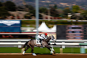 Jockey Riding His Horse at Santa Anita Park