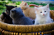 A basket of kittens outdoors.