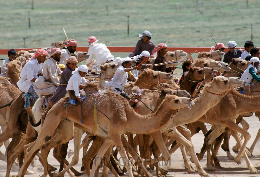Camel racing in Al Ain in Abu Dhabi, United Arab Emirates