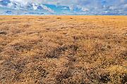 Lentils<br /> Morse <br /> Saskatchewan<br /> Canada