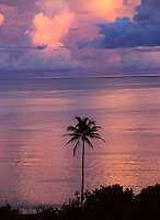 Palm tree silhouetted at sunset in Gizo, Solomon Islands