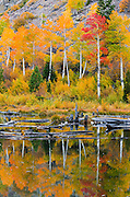 Fall color and beaver pond in Lundy Canyon, Inyo National Forest, Sierra Nevada Mountains, California USA