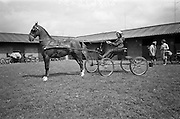 """05/05/1965<br /> 05/05/1965<br /> 05 May 1965<br /> Entrants for the Buggy Competition at the RDS Spring Show, Ballsbridge, Dublin. Ruth Allan (13) driving """"Chocolate Coats""""."""
