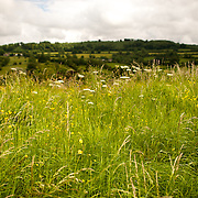 A field in the Cotswolds near Painswick, Gloucestershire.