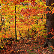 """Variegated Autumn""<br />