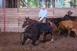 September 23, 2017 - Minshall Farm Cutting 5, held at Minshall Farms, Hillsburgh Ontario. The event was put on by the Ontario Cutting Horse Association. Riding in the $5,000 Novice Horse Class is Eric Van Boekel on Love That Dog owned by the rider.