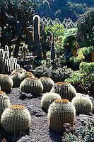 """Espagne. Iles Canaries. Grande Canarie. Jardin Canario. // Spain. Canary islands. Gran Canaria. Garden """"Jardin Canario""""."""
