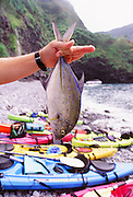 Papio, Fish, Kayaking, North Shore, Molokai, Hawaii