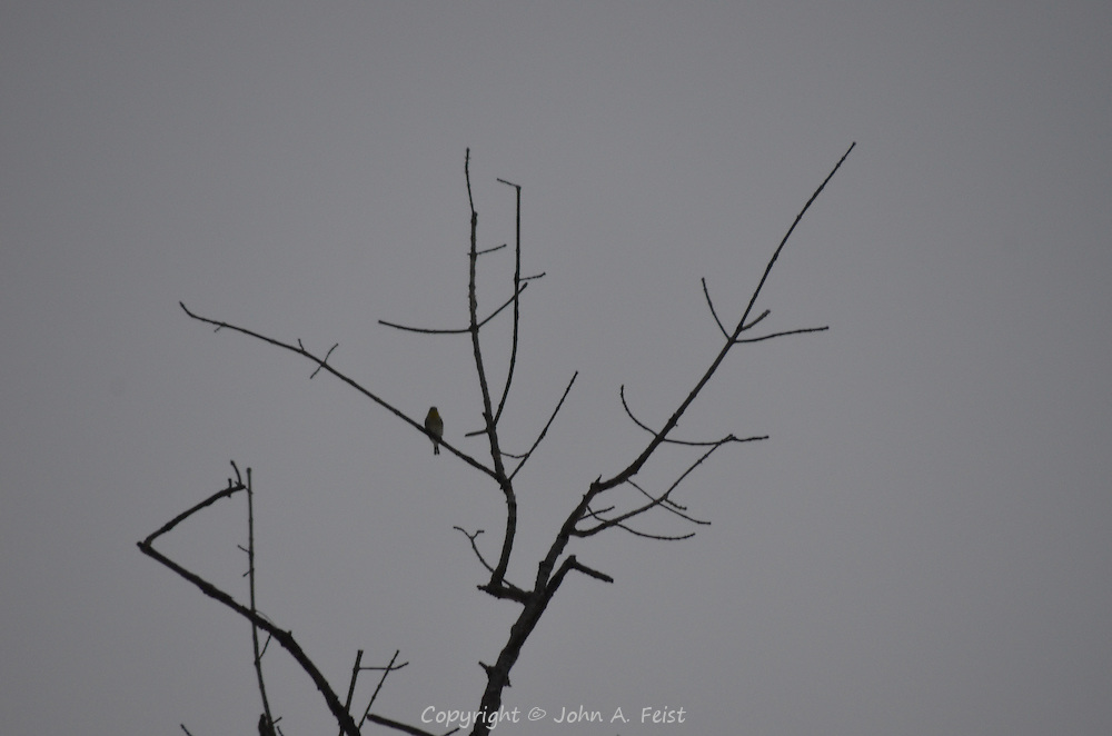 A lonely bird sitting on a bare tree in the winter dawn hours in Hillsborough, NJ