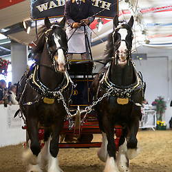 Wadworth & Co Bay Geldings, Max and Monty