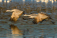 Long & short-legged Wading Birds