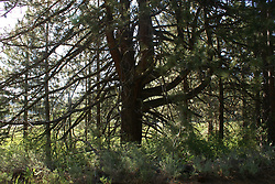 Spooner Lake - Terrestrial Environment