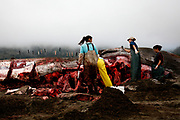 Marine biologists and veterinarians perform a necropsy on a 42-foot fin whale calf that beached itself then died in Stinson Beach, Calif., Monday, August 19, 2013.  They looked for signs of trauma and took samples, then dismantled the mammal for burial.