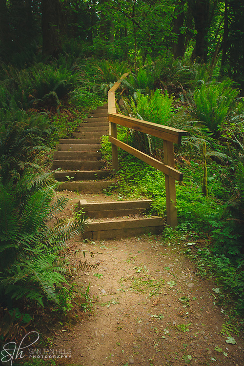 Stairs winding off into the forest - Flaming Geyser State Park, Auburn, WA