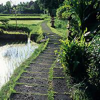 Bali, rice field, Kebun Indah guest house