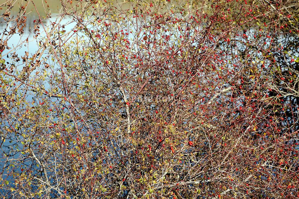 close up of dense bush at a lake