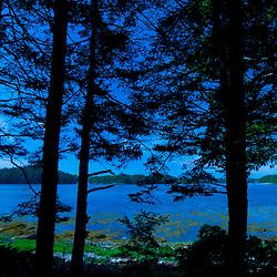 Through the Trees at Ram Island Campsite, Castine, Maine, US