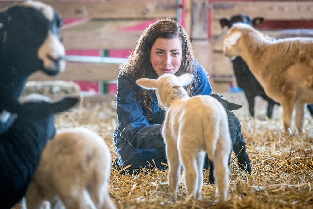 Animal Science students work with newborn lambs on the UMD campus farm as part of Lamb Watch Class in College Park Maryland.Young adult female in coveralls affectionately coos at lamb, College Park, Maryland