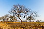 Open Woodland, Mlilwane Game Reserve, Big Game Parks, Swaziland