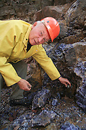 Steve Lukinuk, president of Amethyst Mine Panorama, examines rich vein of amethyst in his open-pit mine, largest deposit in Canada; Dorion, Ontario.