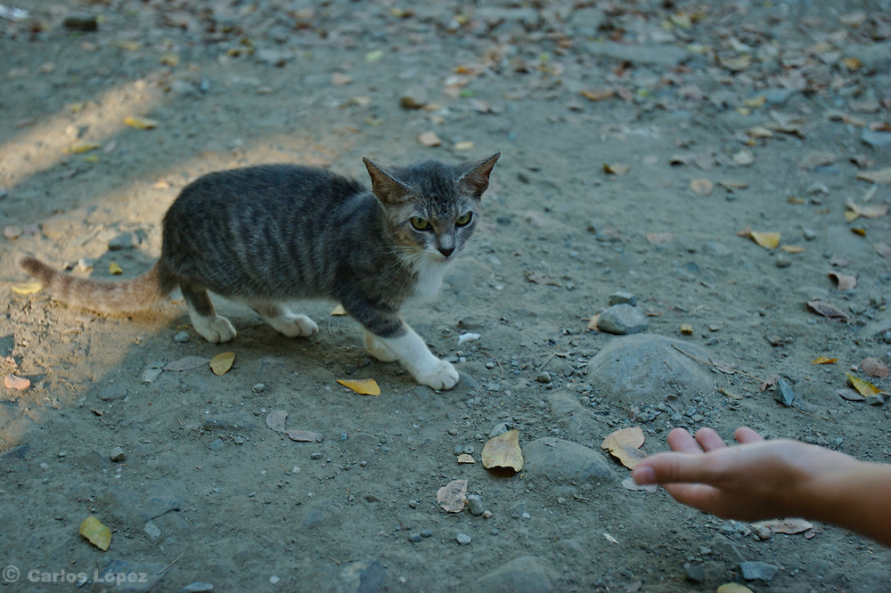 A street cat is being called for a person to feed it.