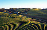 Aerial view over WillaKenzie Estate Vineyards, Yamhill-Carlton, Willamette Valley, Oregon