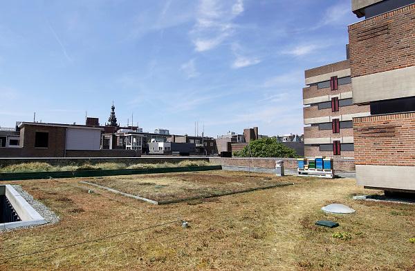 Nederland, the netherlands, Nijmegen, 27-7-2018Het dak van het gemeentehuis,stadhuis,van nijmegen is groen, van planten .Foto: Flip Franssen