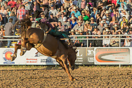 Bareback bronc rider XXXX rides Summit Pro Rodeo's XXXX in the second performance of the Elizabeth Stampede on Saturday, June 2, 2018.