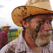 Mike Moyle's face shows the efforts of his labor during a bi-annual cattle roundup at the Bar B ranch near Albia, Iowa.  An early morning shower had turned the ground into a muddy quagmire, as cowboys roped and seperated calves from the herd for vaccinations, branding and the placement of growth stimulant implants.  The male calves were also castrated.  Owner Catherine Bay runs the operation with a herd of over 2,000 cattle.