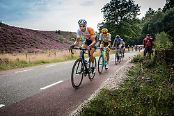 Peloton with riders of Rabobank Development Team (NED) and Team Lotto NL-Jumbo (NED) at the Posbank during the Arnhem Veenendaal Classic at Rheden, Gelderland, The Netherlands, 19 August 2016.<br /> Photo by Pim Nijland / PelotonPhotos.com | All Rights Reserved