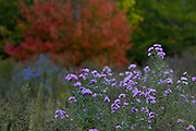 New Hampshire field of flowers