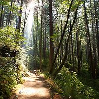 Sunlit trail, Columbia River Gorge, Oregon.