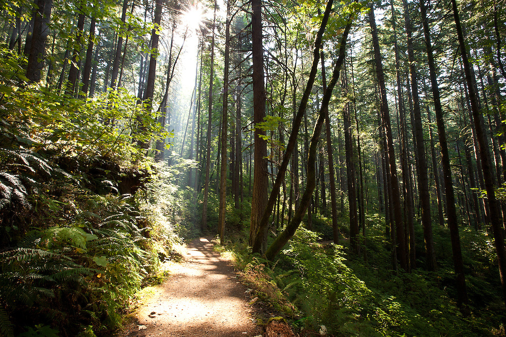 Sunlit trail, Columbia River Gorge, Oregon.