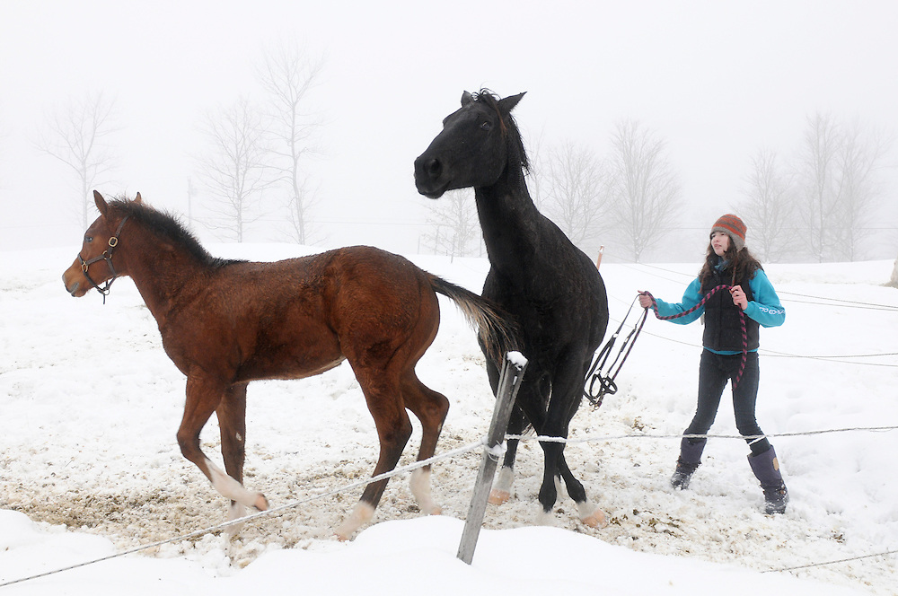 Mackenzie Dakin,16, tries to catch Smokey, the horse she rides for her dressage lessons, at Highland Farm in Pomfret, Vt. Tuesday, December 23, 2014. Dakin, now 17, is enrolled in the Community Based Learning program through South Royalton High School designed to allow her to explore jobs that interest her while earning school credit. <br />