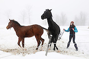 Mackenzie Dakin,16, tries to catch Smokey, the horse she rides for her dressage lessons, at Highland Farm in Pomfret, Vt. Tuesday, December 23, 2014. Dakin, now 17, is enrolled in the Community Based Learning program through South Royalton High School designed to allow her to explore jobs that interest her while earning school credit. <br /> (Valley News - James M. Patterson)