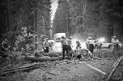 Crews work quickly to clear several trees downed on HWY 62 near Crater Lake.  One car was appeared to have collided with a fallen tree.  It is unknown if there were injuries.