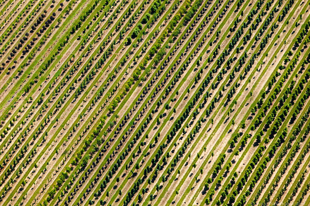Clovelly Nurseries is a 800-acre farm near Chestertown, Md. (Photo by Will Parson/Chesapeake Bay Program with aerial support by LightHawk)