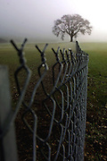 A lane tree amongst fog on a tract of land in Reedville along the urban growth boundary just off of T.V. Highway.