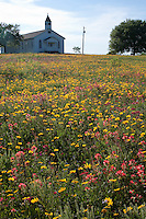 Coreopsis, Phlox and Indian Paintbrush, Gonzales County