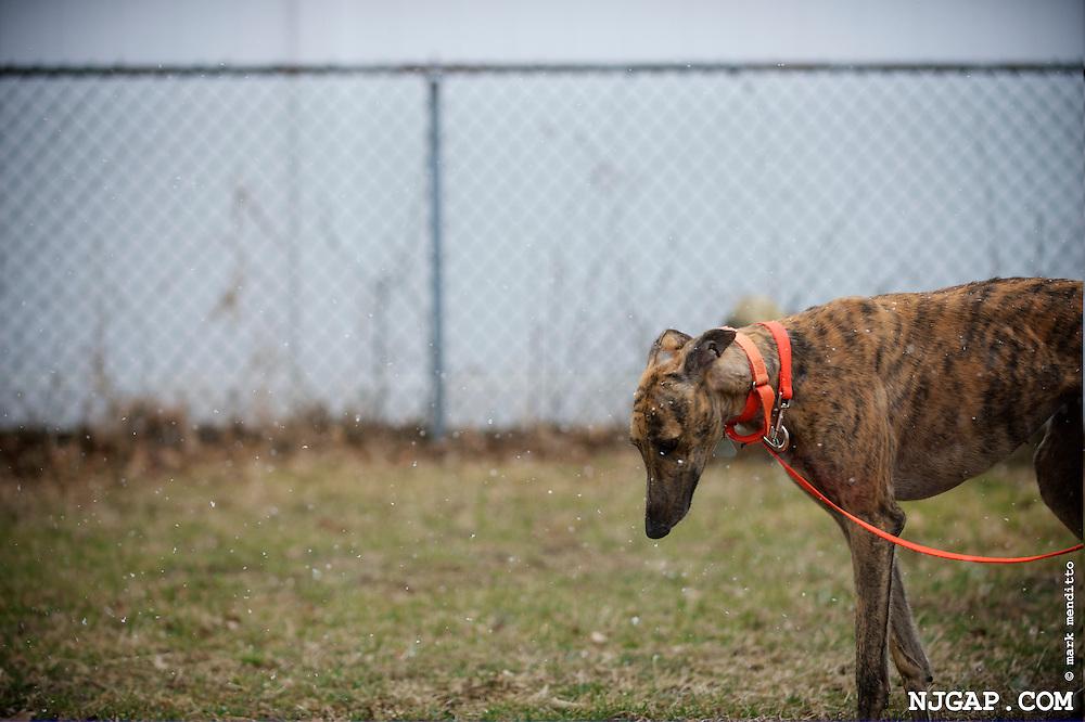 2013-03 Greyhound Adoption Intake
