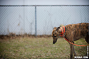 2013-03 Greyhound Adoption Intake