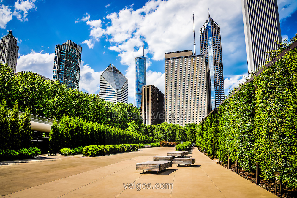 Picture of Chicago Skyline with Millennium Park trees. High resolution picture includes Legacy Tower building, Crain Communicaitons building (formerly Smurfit Stone building) Trump Tower, One Prudential Plaza, and Two Prudential Plaza.
