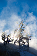 """The """"Burning Bush"""" in the Mammoth Hot Springs"""